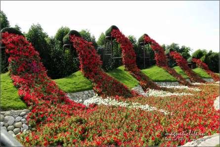Miracle Garden Kwiaty się wylewają