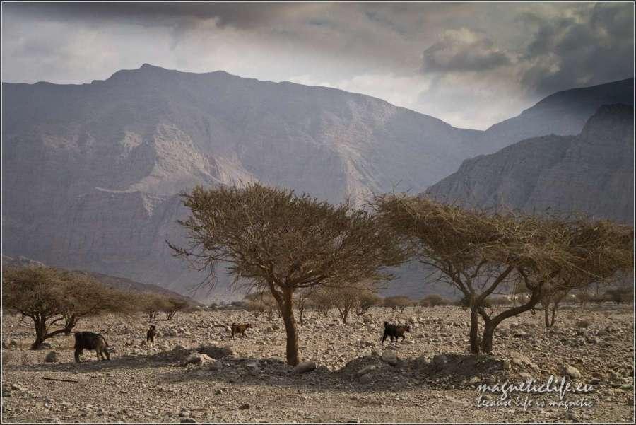 Wadi Ghalilah kozy
