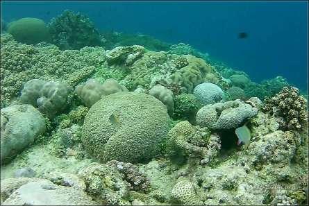 Island Hopping rafa koralowa