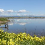 Hikes and Rambles: Bedwell Bayfront Park (Silicon Valley)