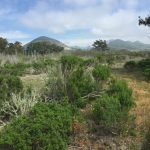 Camping with Kids: Morro Bay