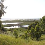 Hikes and Rambles: Don Edwards San Francisco Bay National Wildlife Refuge (Fremont)