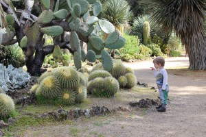 K pointing to a cactus