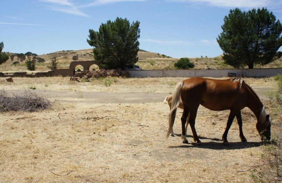 Horses at Mission San Miguel