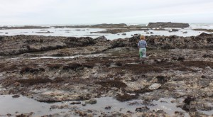 K looking at tide pools