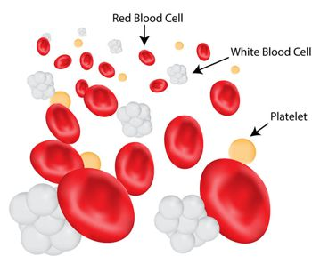 3d rendering of blood showing platelets