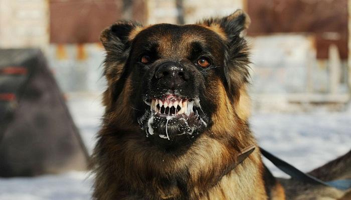 Perro Salivación Excesiva