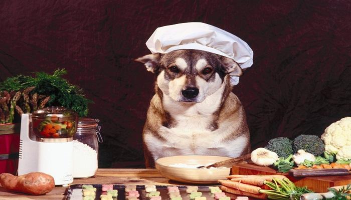Comida casera para perros
