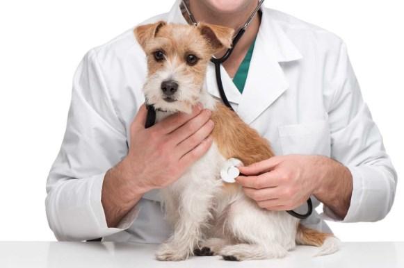llevar a tu perro al veterinario