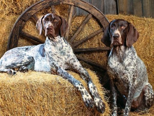 criadores de perros