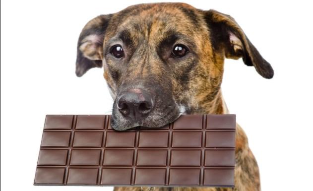 Dulces para perros