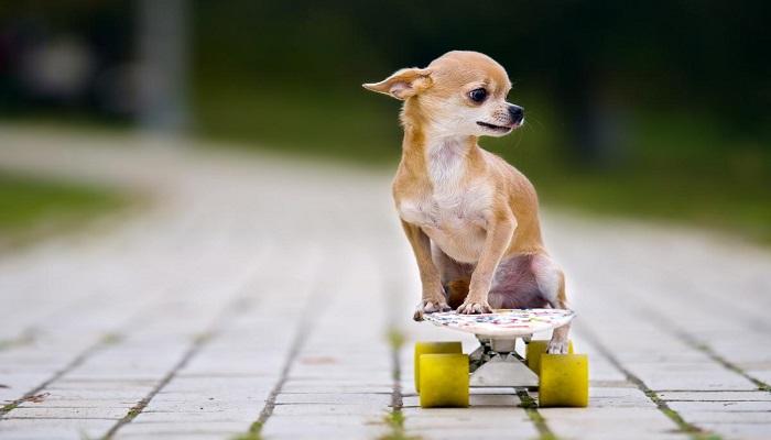 5 Razas De Perros De Pelo Corto Características Y