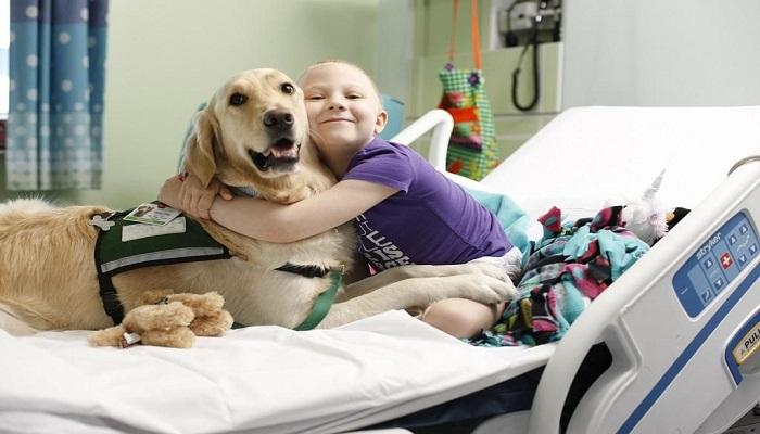 Razas de perros terapéuticos