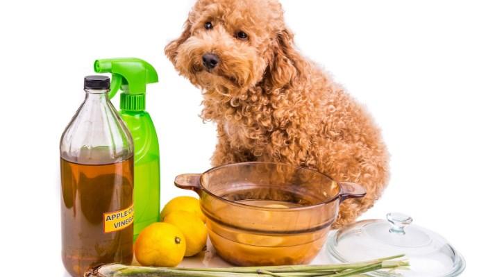 remedio casero para pulgas en perros