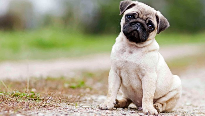 Cómo prevenir la diarrea en tu perro