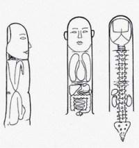 Sistemy-sootvetstviya-nasekomogo-na-paltsah
