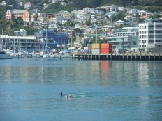 Lunchtime swimmers in Wellington harbour.
