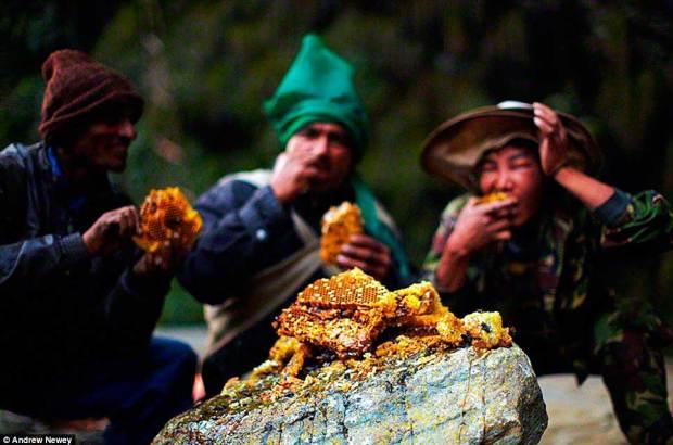 cacadores-de-mel-nepal04