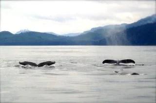 2匹のクジラ