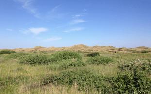 Dunes from highway