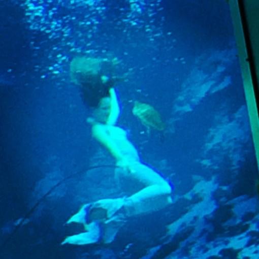 Turtle stealing the show at Weeki Wachee Springs Mermaid Shows