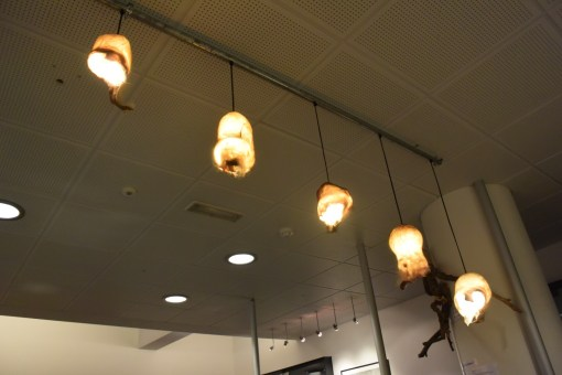 """Scrotum light fixtures at The Icelandic Phallological """"Penis"""" Museum in Downtown Reykjavik"""