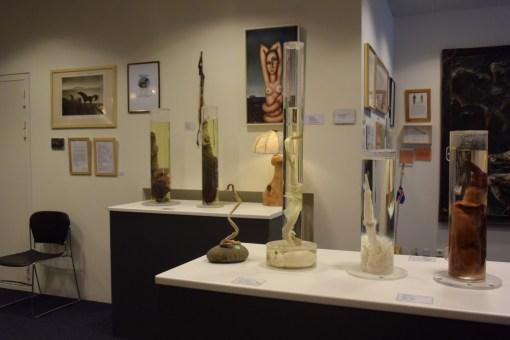 "The Icelandic Phallological ""Penis"" Museum in Downtown Reykjavik"