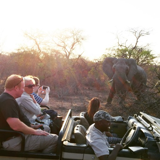 Stays at Moditlo River Lodget in Hoedspruit, South Africa include 2 action packed game drives per day!