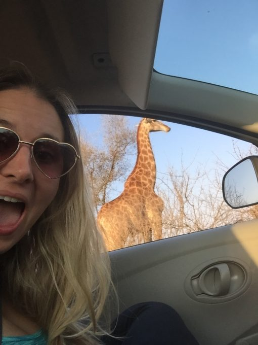 Doing a self-drive through Kruger National Park is a great way to save money and pretend you're a bush guide!