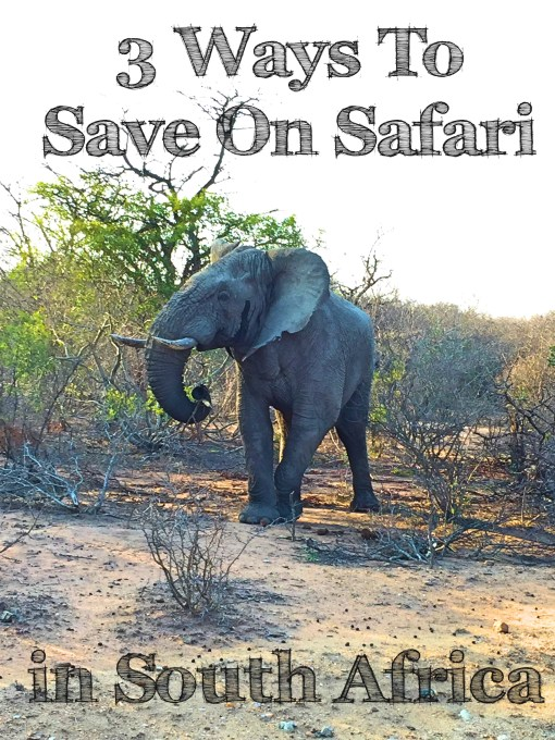 3 Ways To Save on Safari in South Africa - how to get a luxury safari on a backpacker's budget