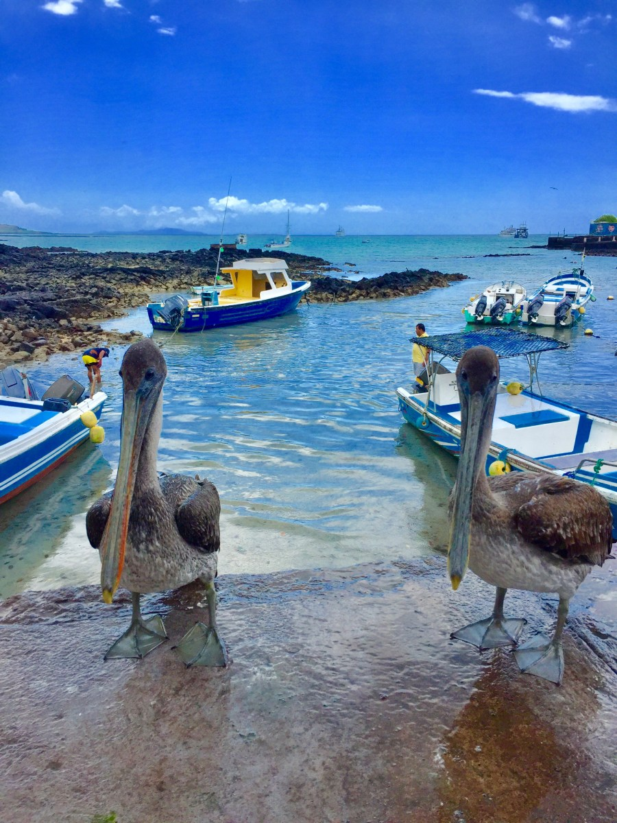 Explore the Galapagos Land with Nature Galapagos