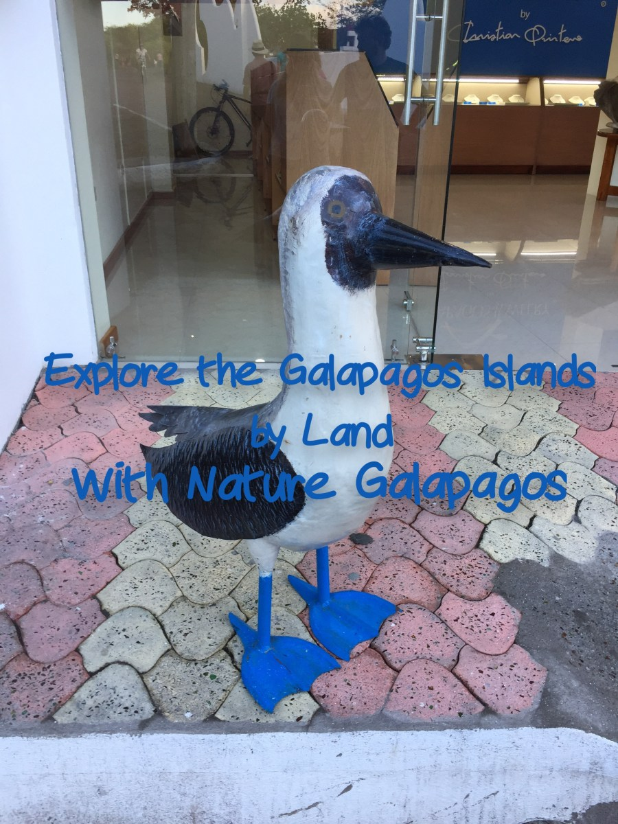 IMG_48Explore the Galapagos by Land with Nature Galapagos Tours- Mags On The Move