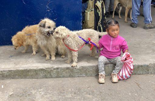 World Vets Otavalo, Ecuador
