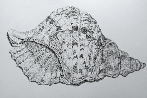 ~ stippled seashell