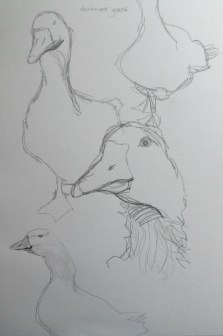 ~ Geese sketches