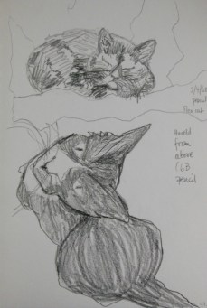 ~ Sleeping Cat and Harold from above