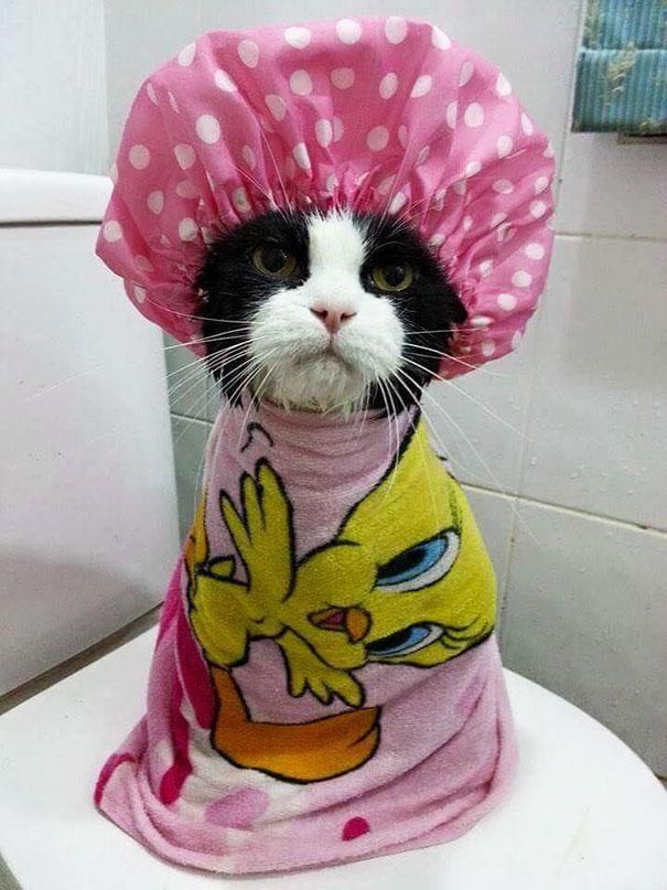 10-animals-taking-bath-32__605