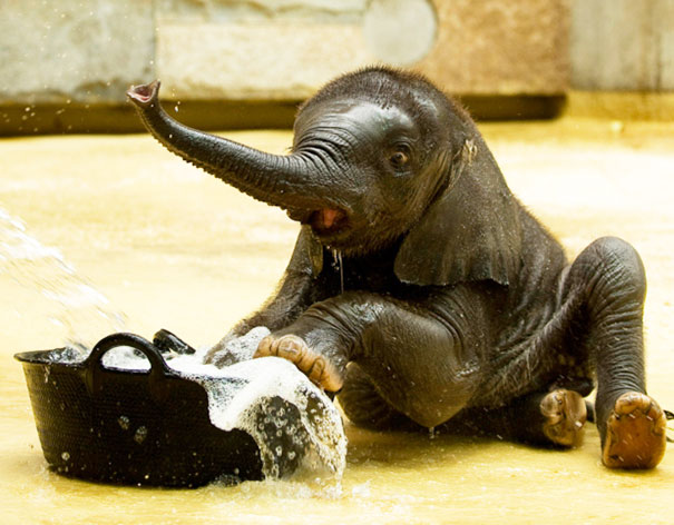 12-XX-animals-that-enjoys-taking-a-bath-3__605