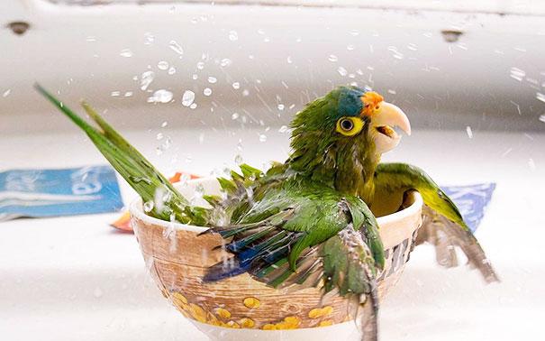 9-XX-animals-that-enjoys-taking-a-bath-6__605