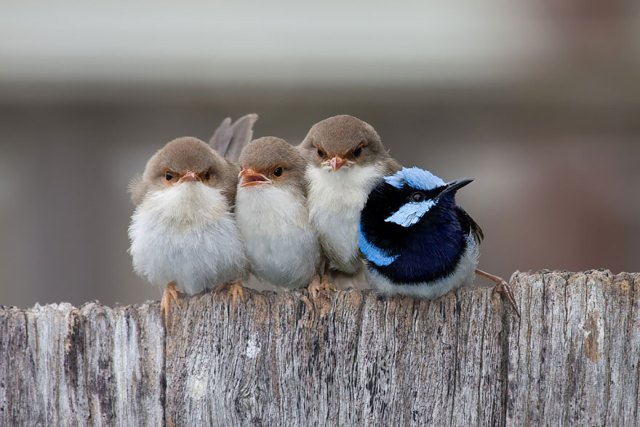 4-birds-keep-warm-bird-huddles-13__880