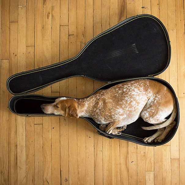 2-cute-sleeping-animals-99__605