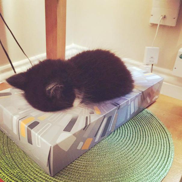 4-cute-sleeping-animals-65__605
