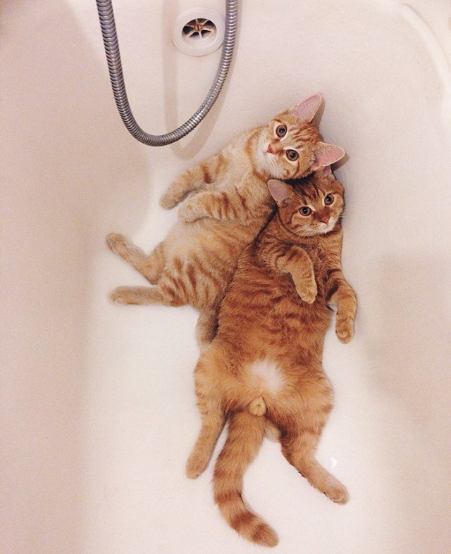 12-rescue-cats-inseparable-brothers-ginger-anyagrapes-19