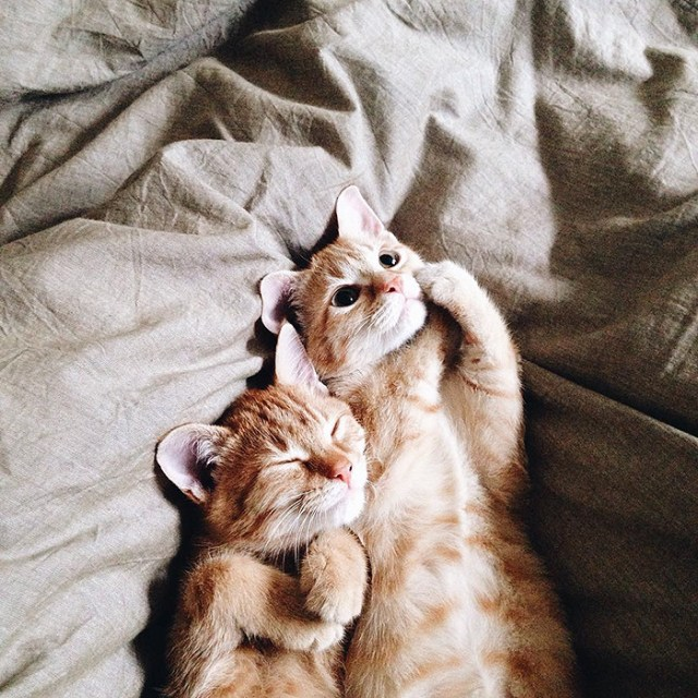 13-rescue-cats-inseparable-brothers-ginger-anyagrapes-22