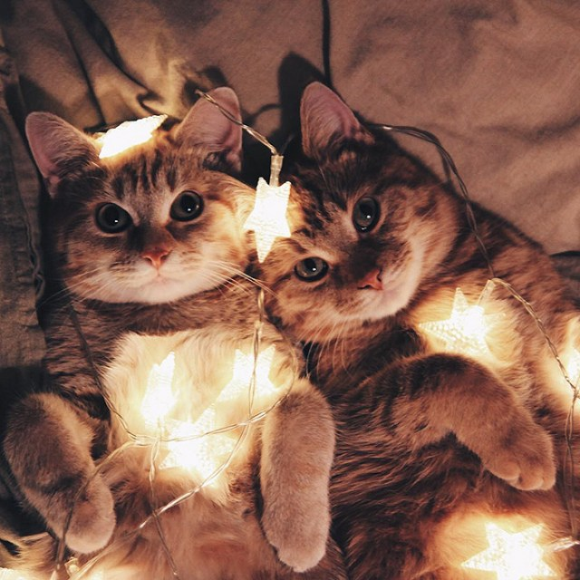 15-rescue-cats-inseparable-brothers-ginger-anyagrapes-14