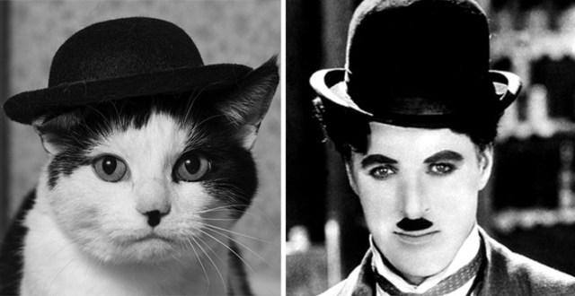 18-celebrity-look-alikes-animals-45__700