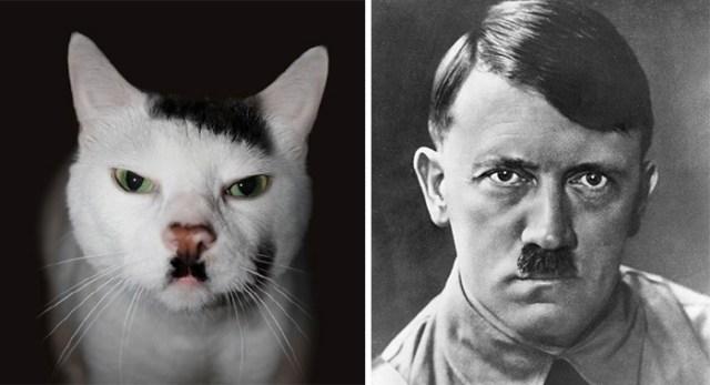 2-celebrity-look-alikes-animals-53__700