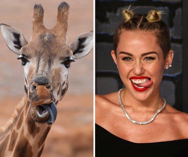 20-celebrity-look-alikes-animals-262__700