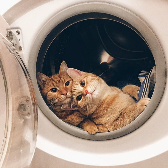 5-rescue-cats-inseparable-brothers-ginger-anyagrapes-13