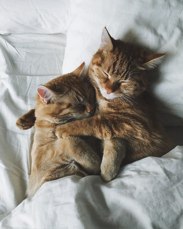 9-rescue-cats-inseparable-brothers-ginger-anyagrapes-12